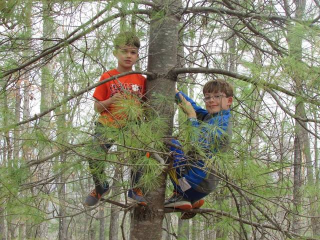 Boys in a tree - The Family Glampers