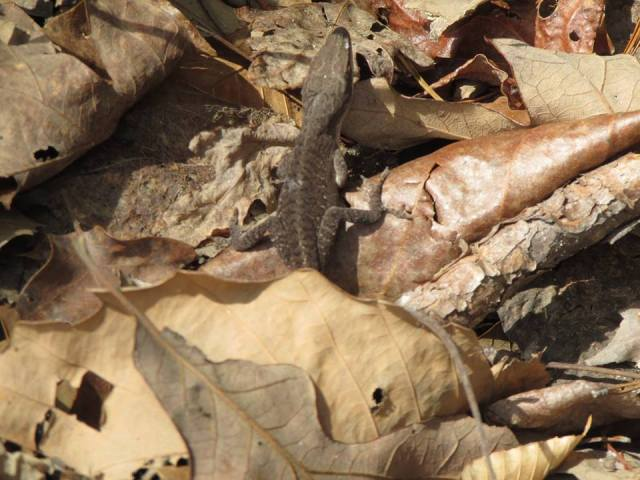 Lizard spotted - The Family Glampers